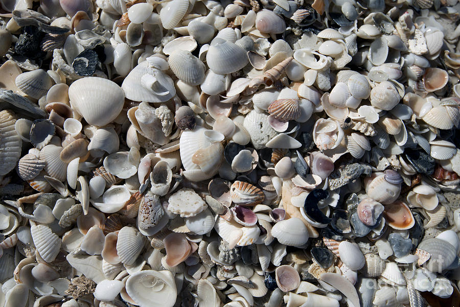 Sea Shells Photograph - Remnants by Terri Winkler
