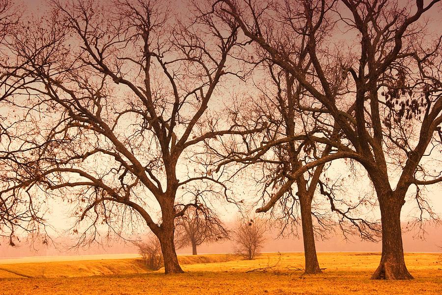 Tree Photograph - Revelation by Iris Greenwell