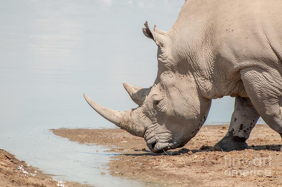 фото носорога в воде
