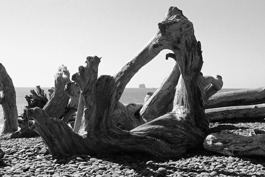 Rialto Beach Cake Rock Driftwood Photograph