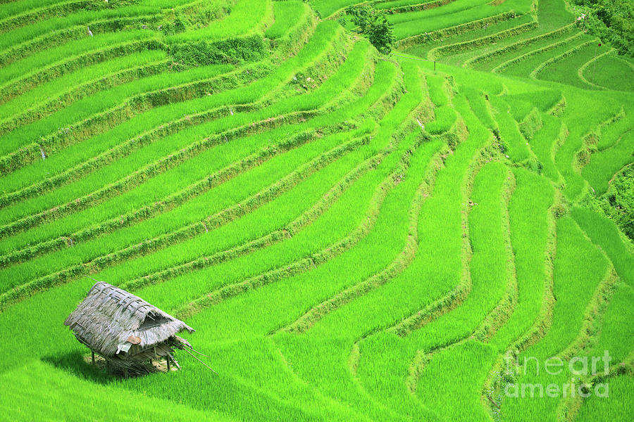 Terraces Photograph - Rice Field Terraces by MotHaiBaPhoto Prints