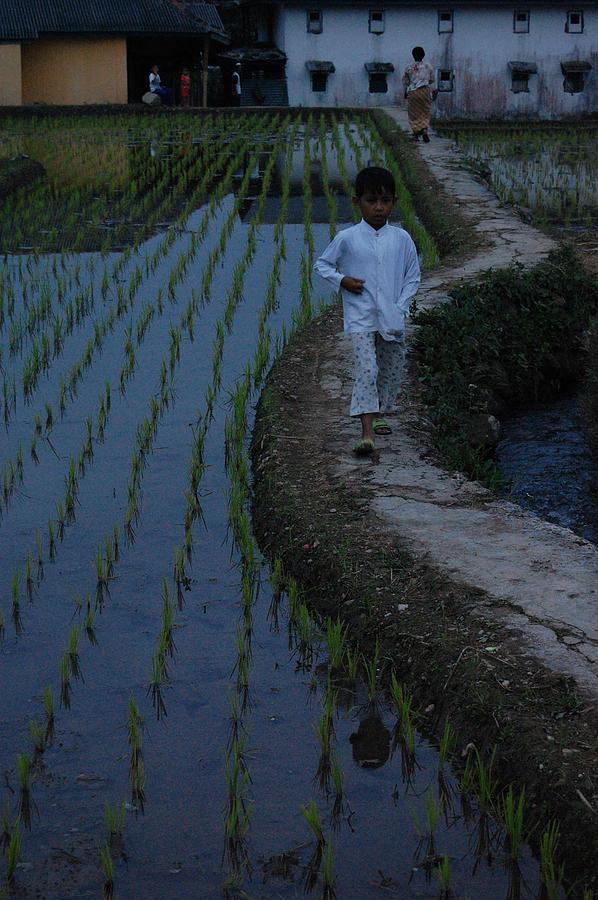 Rice Terrace In The Dusk Photograph