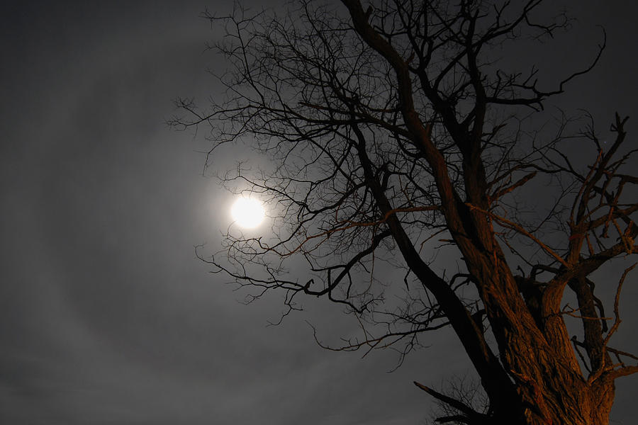 Moon Photograph - Ring Around Moon by Alan Lenk