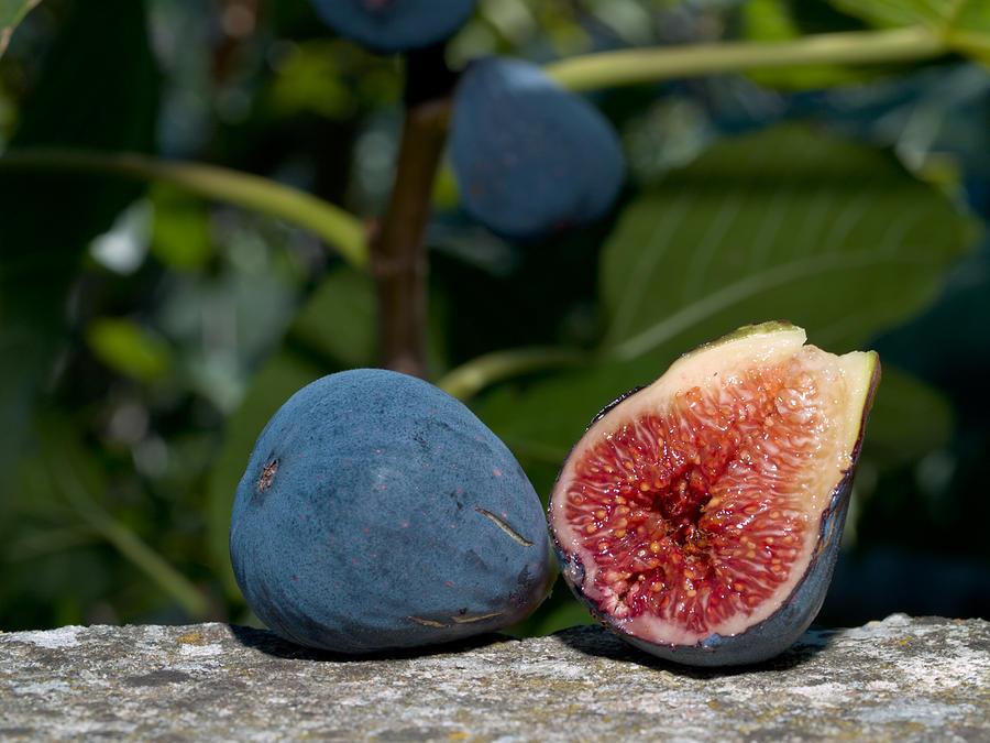 Fruit Photograph - Ripe Figs by Jim DeLillo