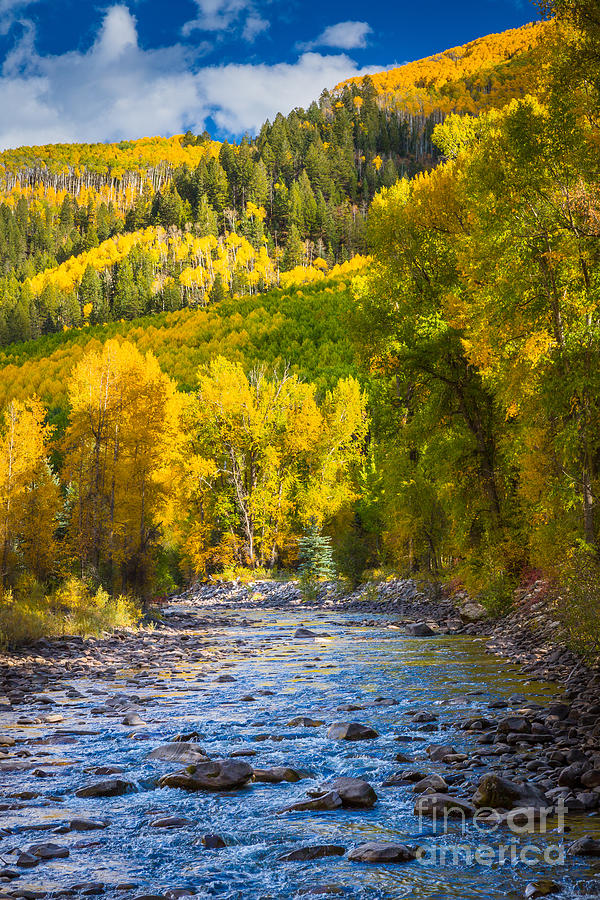 America Photograph - River And Aspens by Inge Johnsson