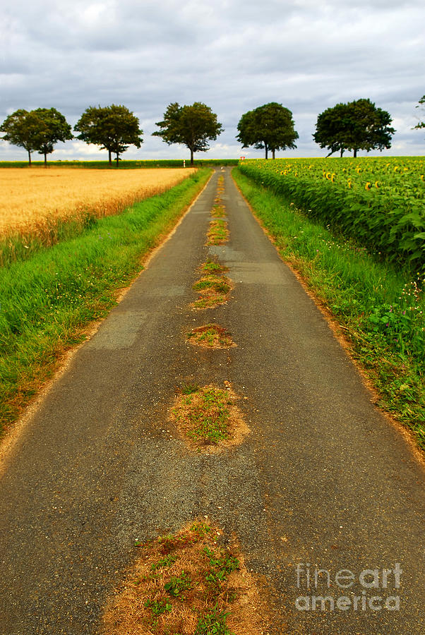 Landscape Photograph - Road In Rural France by Elena Elisseeva