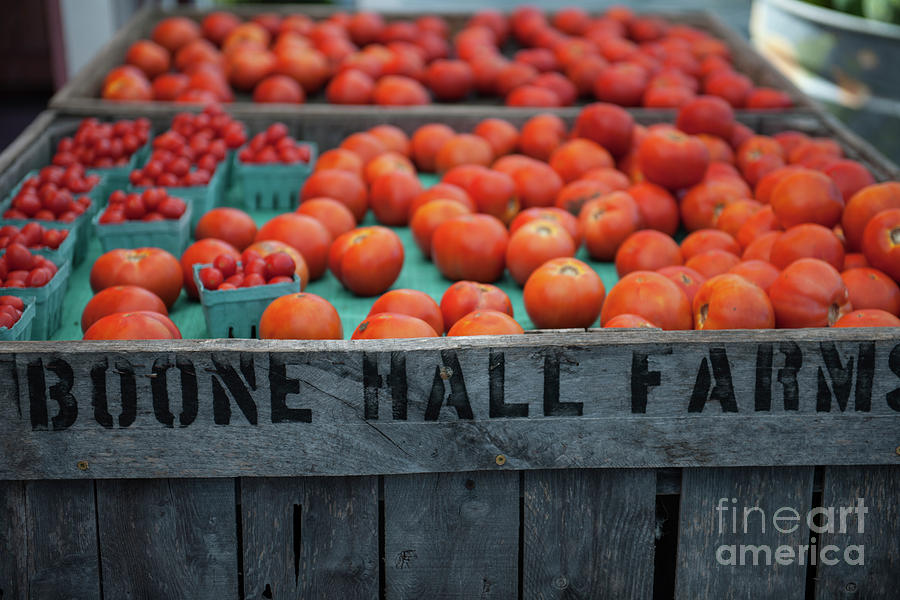 Roadside Tomatoes Photograph