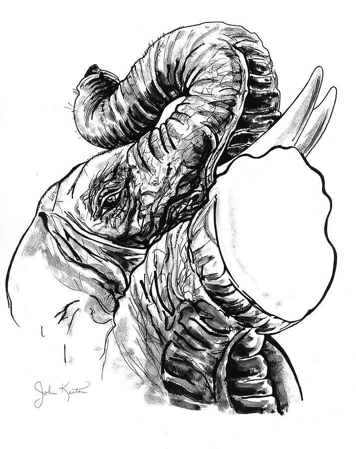 Elephants Drawing - Roaring Elephant by John Keaton