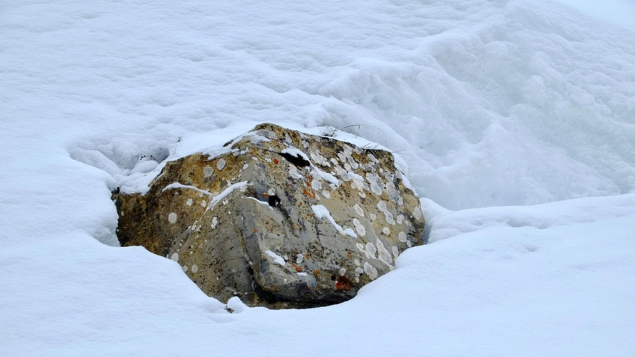 Rock In Snow Photograph
