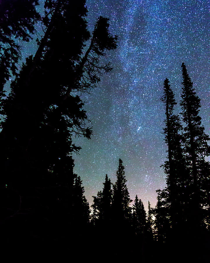 Rocky Mountain Forest Night Photograph