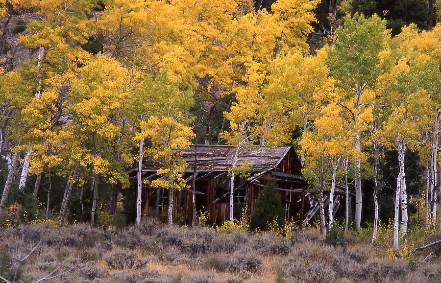 Historic Photograph - Rocky Mountain Homestead by Cynthia  Cox Cottam