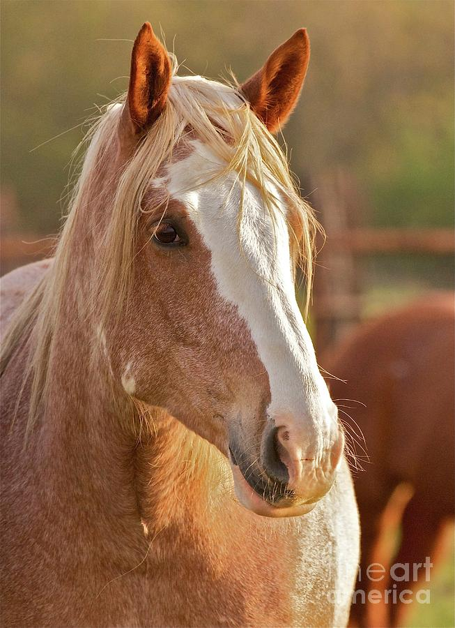 Rodeo Bronc Beauty Photograph