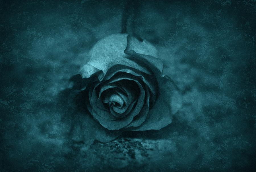 Flower Photograph - Rose - Green by Angie Tirado