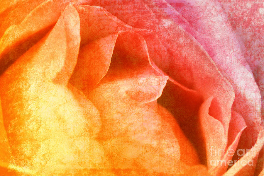 Vintage Photograph - Rose  by Angela Doelling AD DESIGN Photo and PhotoArt
