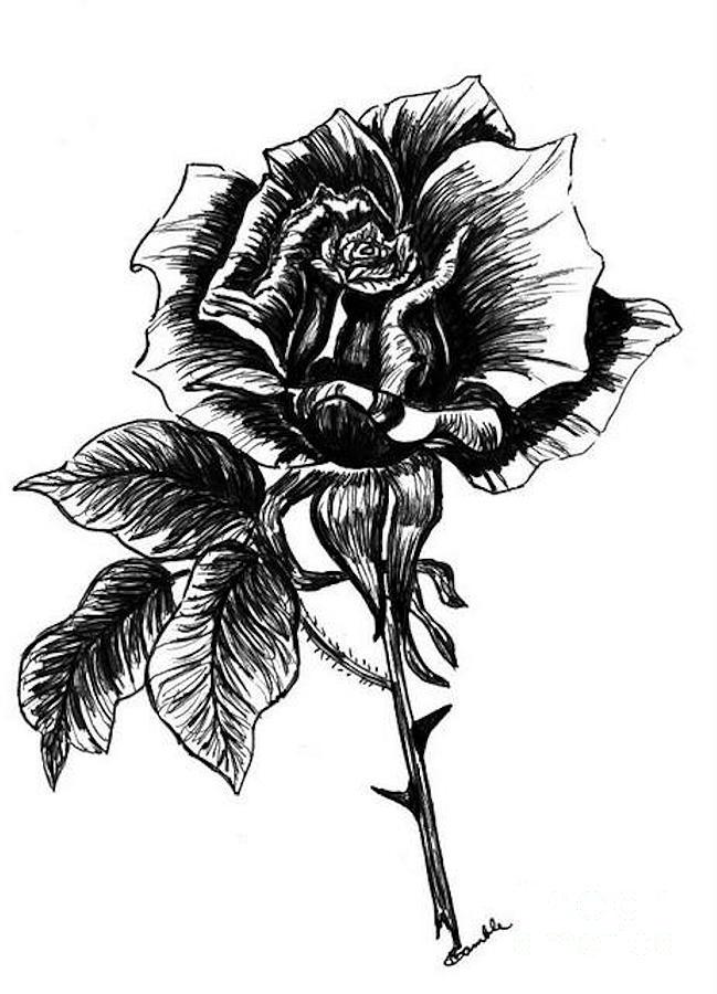 Pen &ink Painting - rose I  by Nancy Rucker