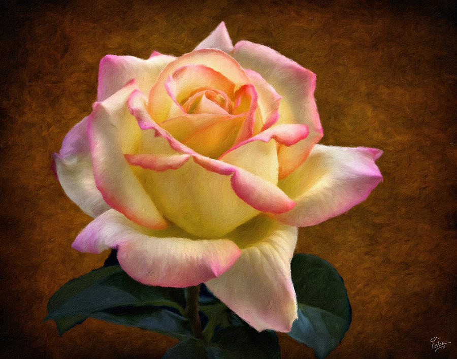 Rose Oil Painting Photograph: fineartamerica.com/featured/rose-oil-painting-endre-balogh.html