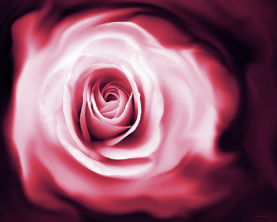 Rose Photograph - Roses Whispers Magenta  by Jennie Marie Schell