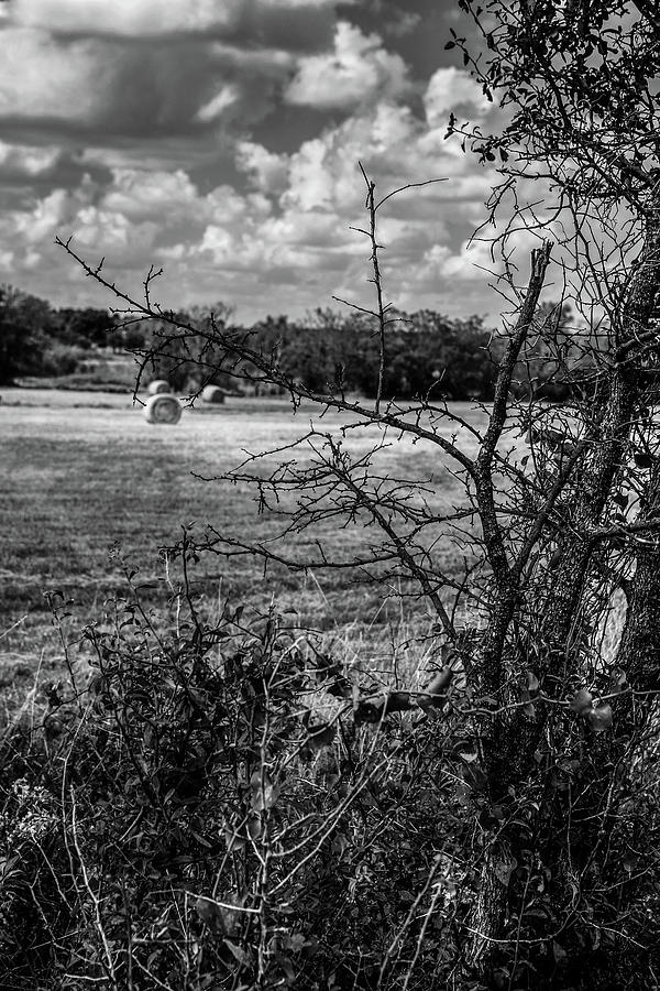 Round Bales In Texas 002 Photograph
