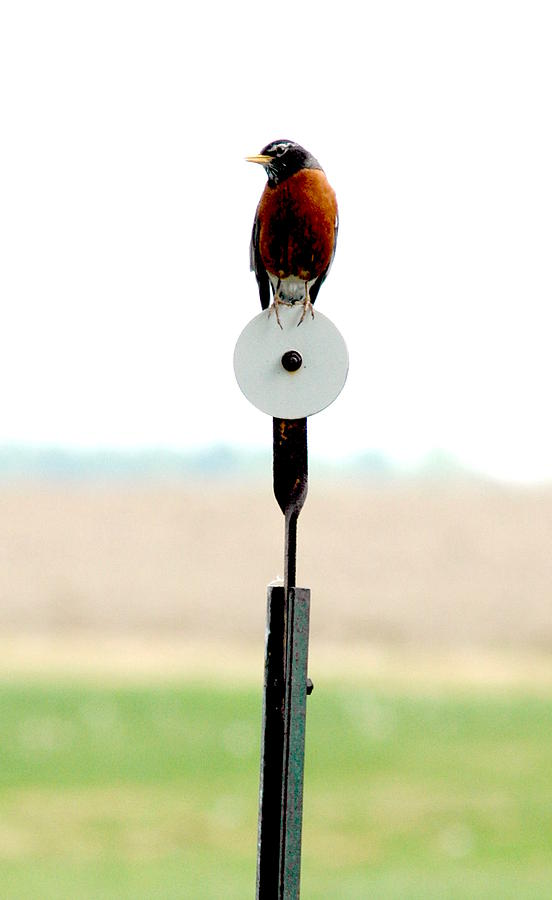 Bird Photograph - Round Robin by Emily Stauring