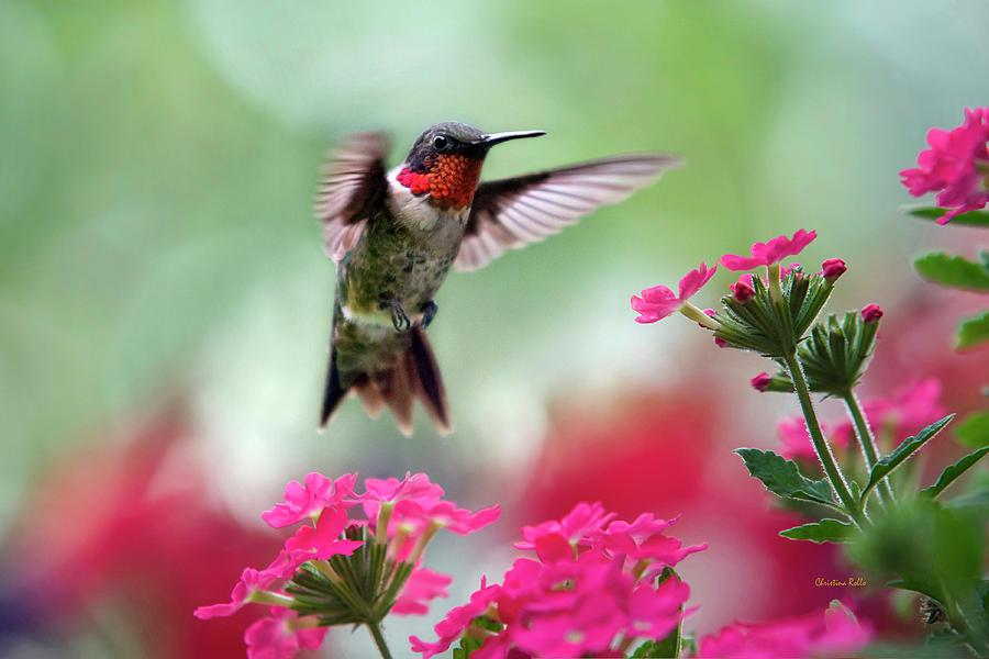 Ruby Garden Jewel Photograph