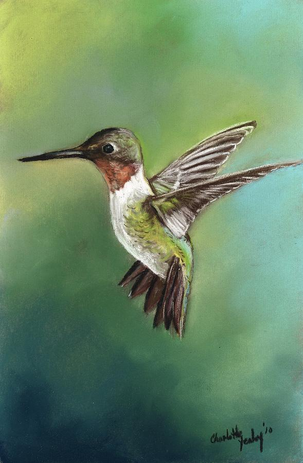 Bird Painting - Ruby Throated Hummingbird by Charlotte Yealey