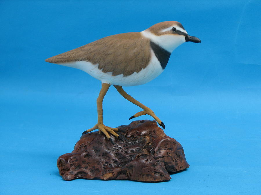 Woodcarving Sculpture - Ruddy Turnstone by Jack Murphy