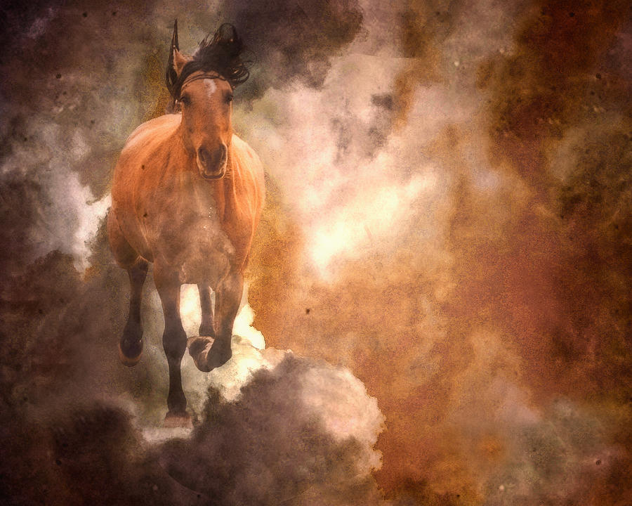 Equine Photograph - Run With Thunder by Ron  McGinnis