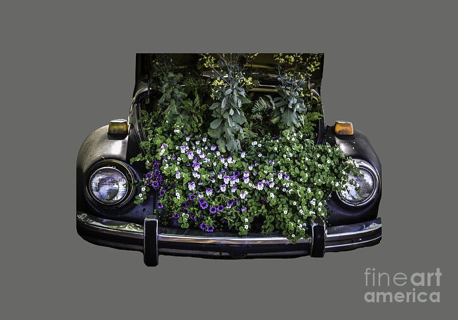 Running On Flowers Photograph