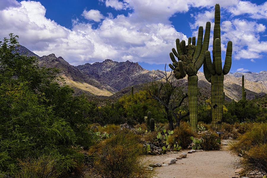 Sabino Canyon No4 Photograph