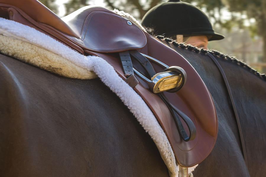 Saddled And Ready Photograph