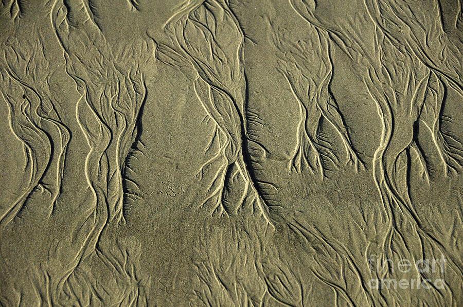 Sand Pattern Photograph - Sand Pattern by Marc Bittan