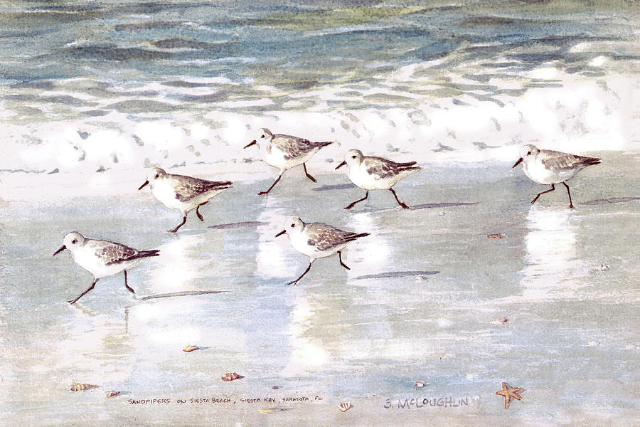 Sandpipers Painting - Sandpipers On Siesta Key by Shawn McLoughlin