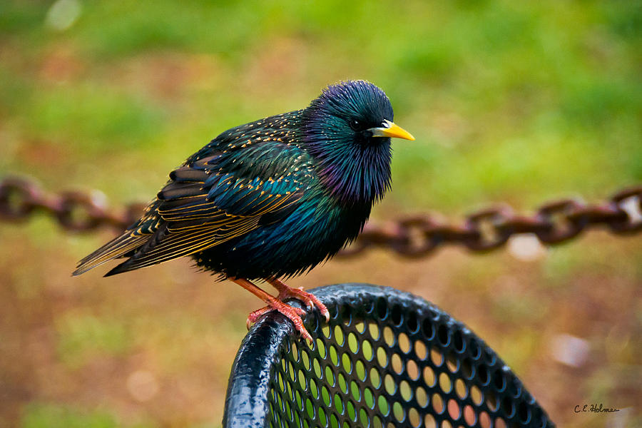 Bird Photograph - Saving A Seat by Christopher Holmes