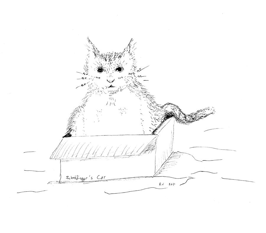 Cat Drawing - Schrodinger Cat by Regina Valluzzi