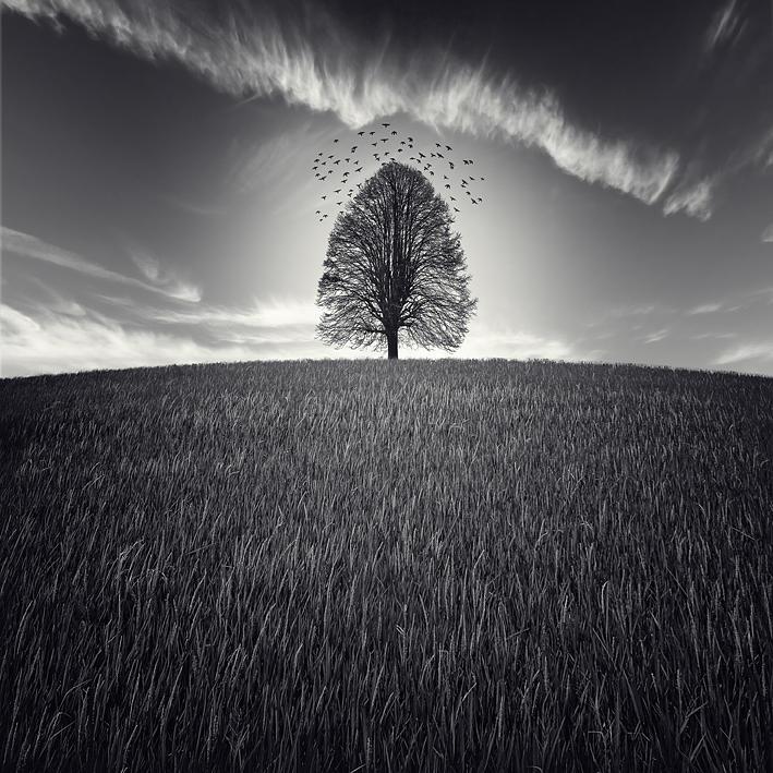 Photograph - Se Va La Vida by Luis  Beltran