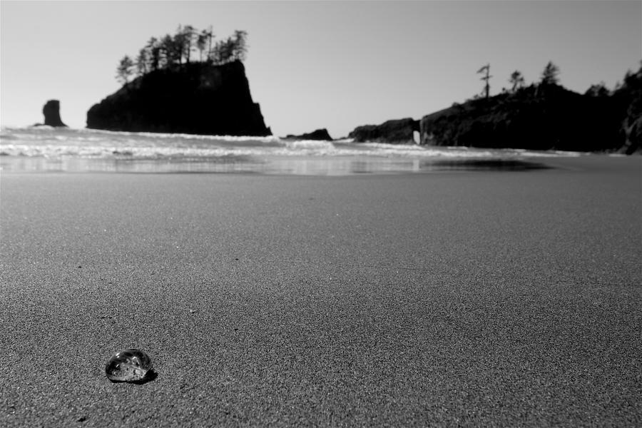 Sea Gooseberry Photograph