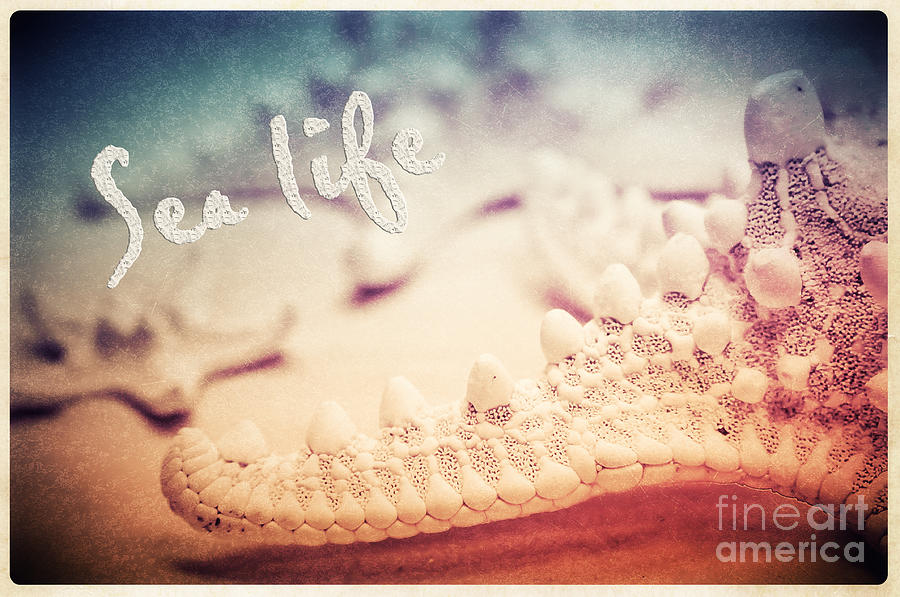 Sea Photograph - Sea Life by Angela Doelling AD DESIGN Photo and PhotoArt
