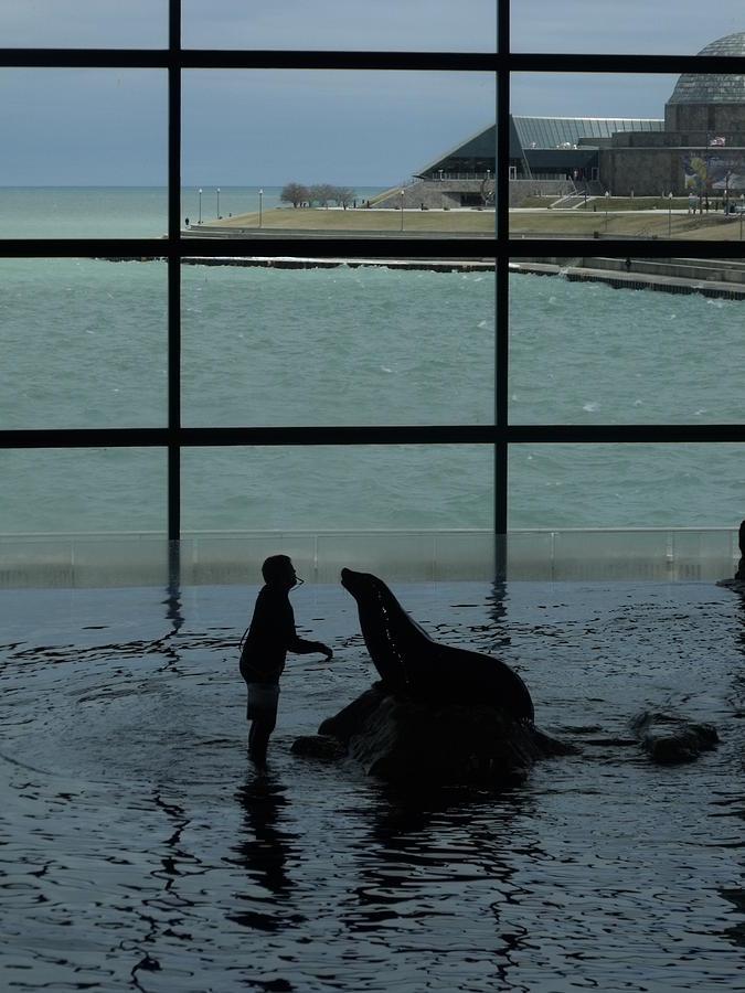 Sea Lion II Photograph