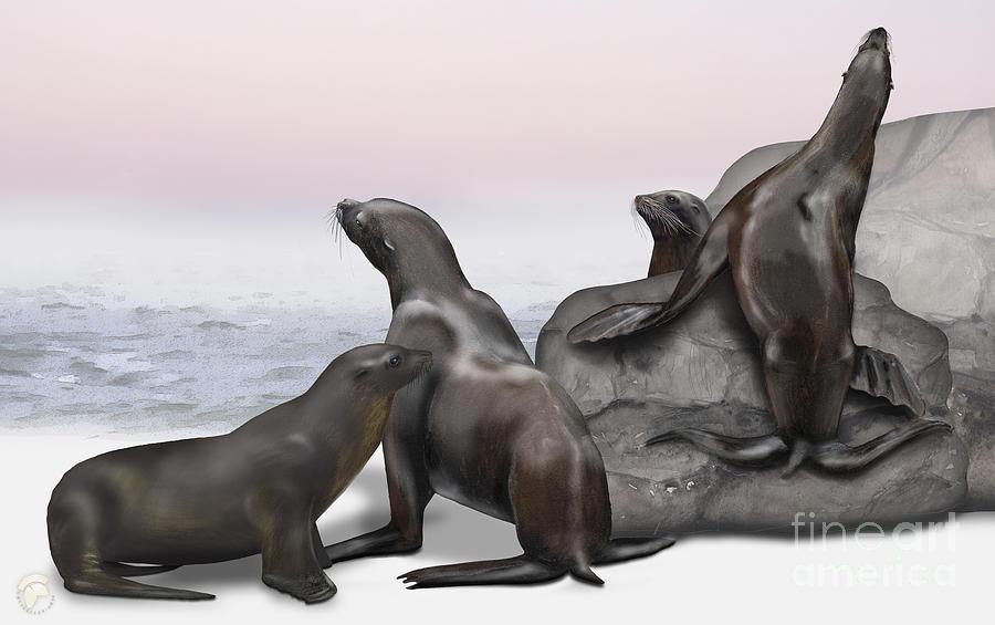 Sea Lion Zalophus Californianus - Marine Mammals - Seeloewen Painting