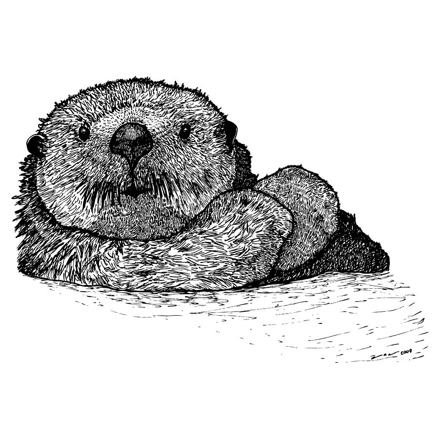 how to draw a otter face