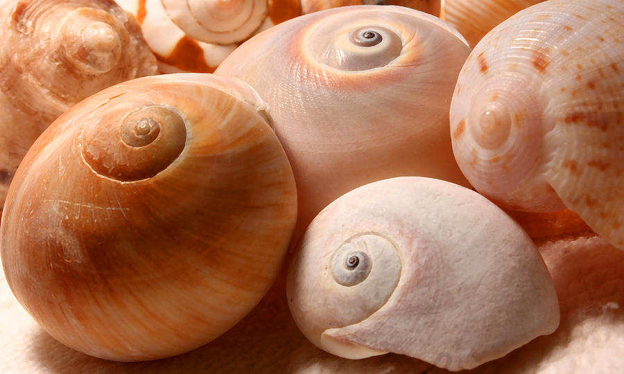 Sea Spirals Photograph
