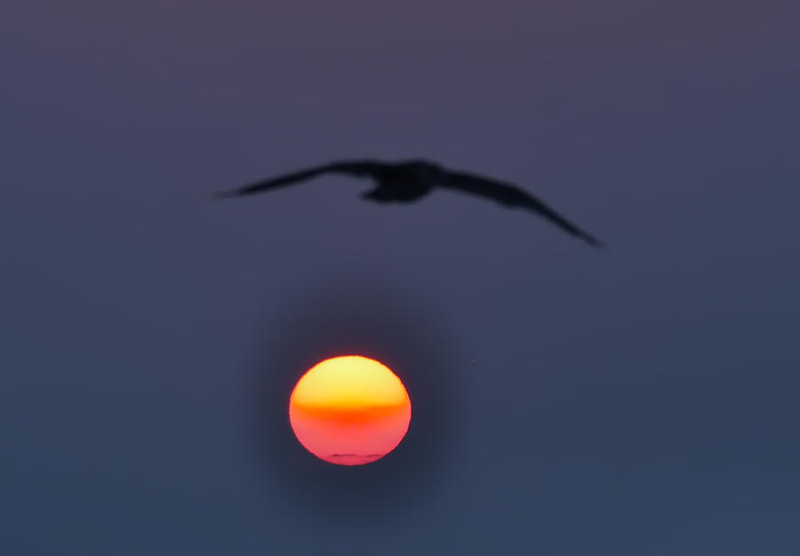 Atlantic City  Photograph - Seagull Sun by Bill Cannon