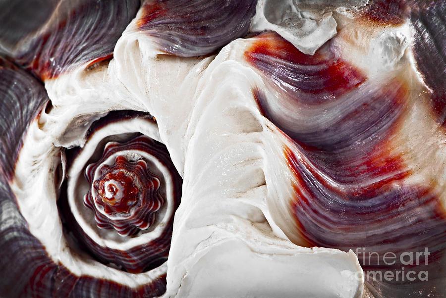 Shell Photograph - Seashell Detail by Elena Elisseeva