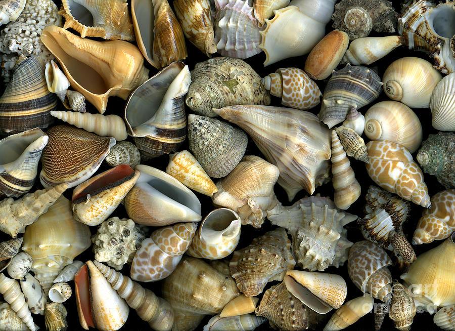Shells Photograph - Seashell Medley by Christian Slanec