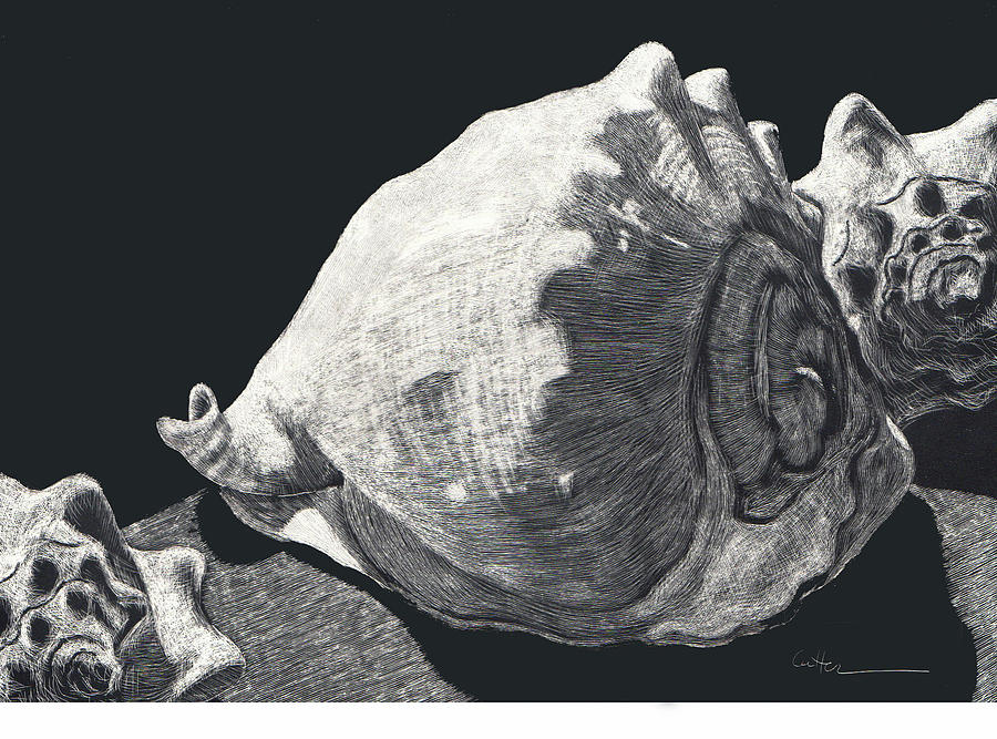 Seashell Drawing - Seashells She Sells by Diane Cutter