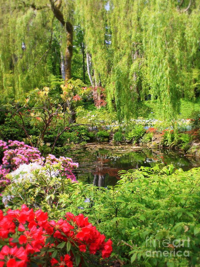 Secret garden pond photograph by carol groenen for Secret garden pool novaliches