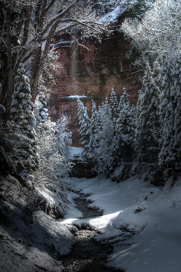 Snow Photograph - Secret Snow by Allen Lefever