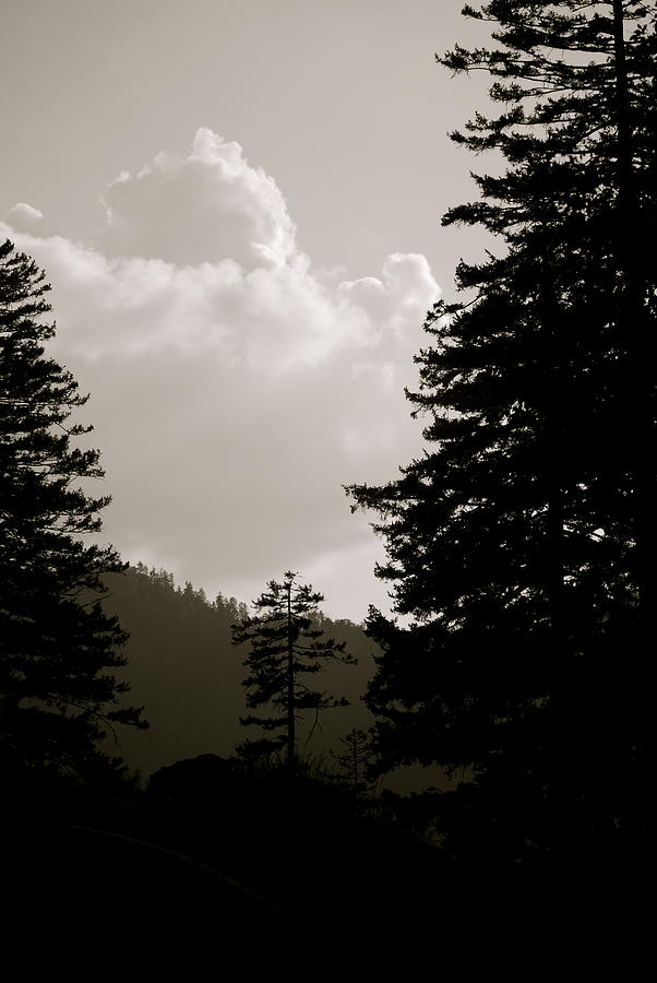 Smokey Photograph - See The Mountain Through The Trees by Kimberly Camacho