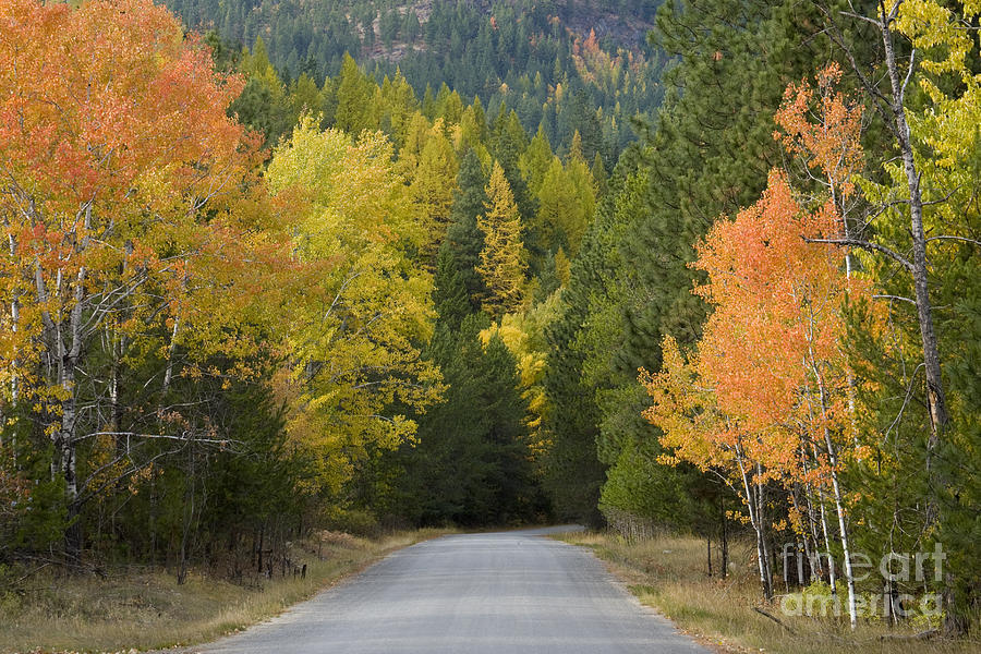 Trees Photograph - Selkirk Color by Idaho Scenic Images Linda Lantzy