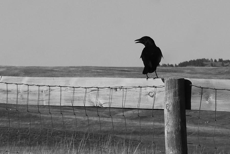 South Dakota Photograph - Sentinel by Harold Clayberg